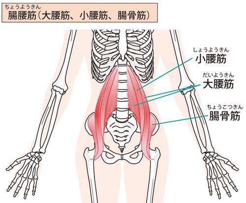 腸腰筋845882.jpg